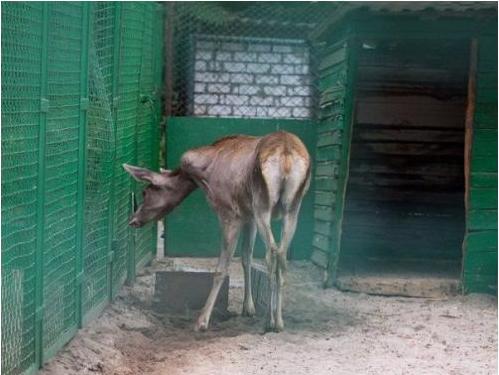 «Нечеловеческие» условия: спустя почти сорок лет «заключенные» днепропетровского зоопарка вернутся в нормальные условия содержания (фото) - фото 15