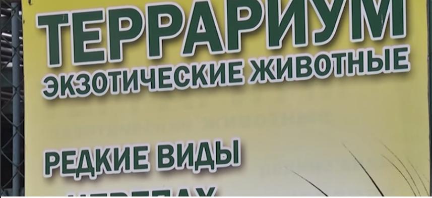 «Нечеловеческие» условия: спустя почти сорок лет «заключенные» днепропетровского зоопарка вернутся в нормальные условия содержания (фото) - фото 8