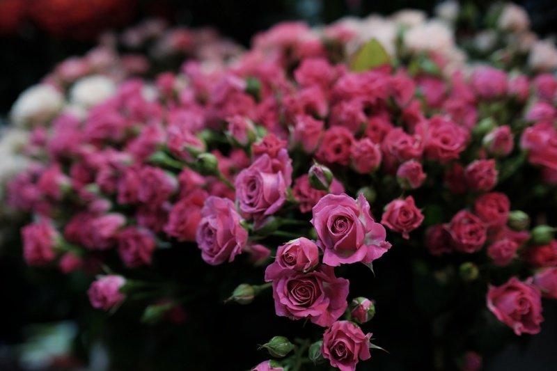 На квіткових ринках у Тернополі сьогодні ажіотаж (фото), фото-8