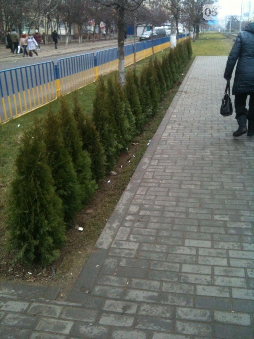На Левобережном-3 посреди дня воруют зеленые насаждения (ФОТО, ВИДЕО) (фото) - фото 1