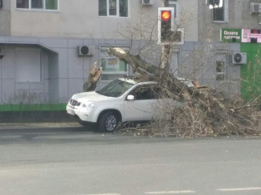 67f53cb8e2d783cacc9dafdb19cb26a8 В Одессе дерево раскололось о мощный паркетник