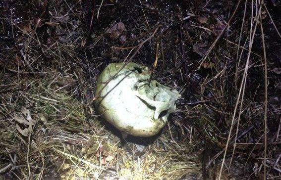 Рештки безвісти зниклої 3 роки тому жінки знайшли у лісовому масиві (фото) - фото 1