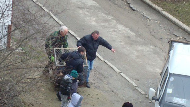 У Тернополі збили собаку і залишили помирати (Фото) (фото) - фото 3