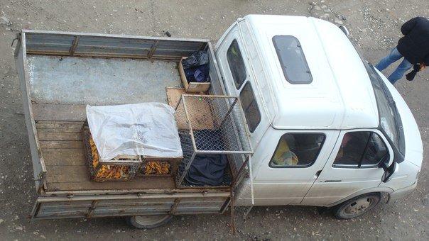 У Тернополі збили собаку і залишили помирати (Фото) (фото) - фото 1