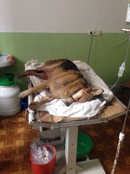 У Тернополі збили собаку і залишили помирати (Фото) (фото) - фото 4
