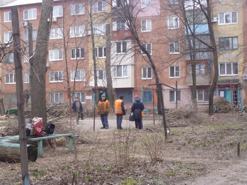 Безжалостная опиловка деревьев в Красноармейске продолжается (фото) - фото 1
