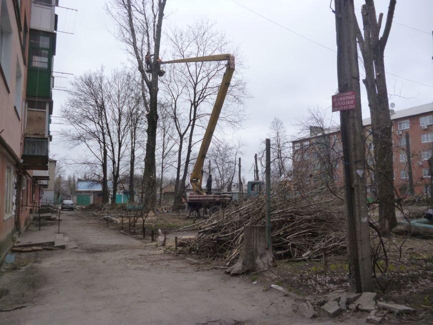 Безжалостная опиловка деревьев в Красноармейске продолжается (фото) - фото 3