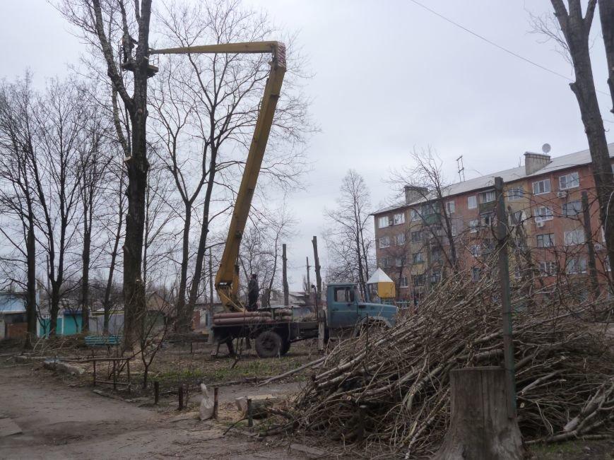 Безжалостная опиловка деревьев в Красноармейске продолжается (фото) - фото 4