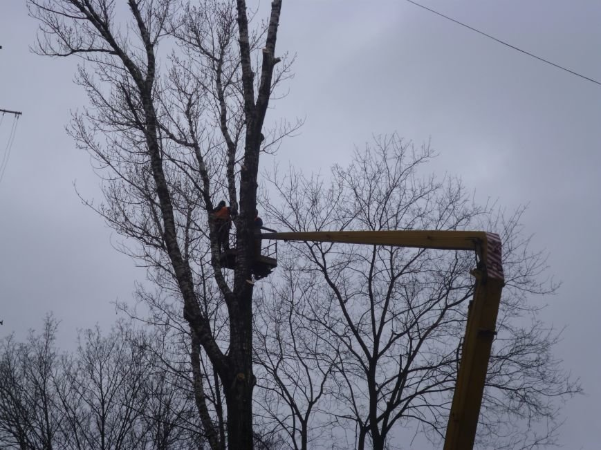 Безжалостная опиловка деревьев в Красноармейске продолжается (фото) - фото 2