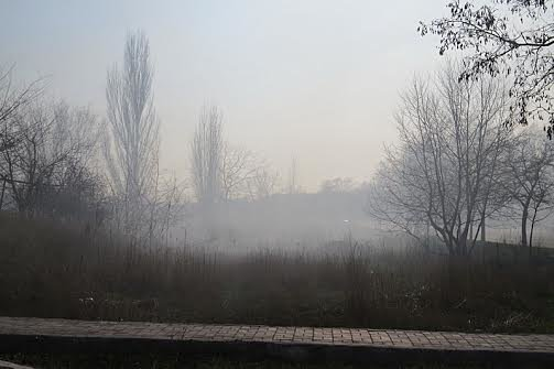 В Мариуполе огонь, спаливший камыши, чуть не подобрался к заправкам (Фотофакт), фото-9