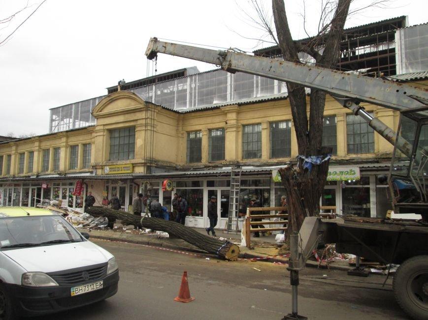 c9719cae2d0a8309e93d7f34f425fb05 На Новом рынке в Одессе спиливают деревья и сносят ларьки