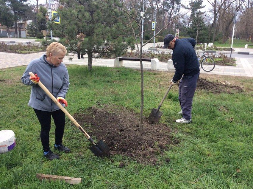 Анапчане посадили деревья (фото) - фото 6