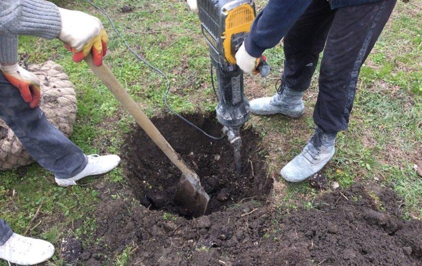 Анапчане посадили деревья (фото) - фото 2
