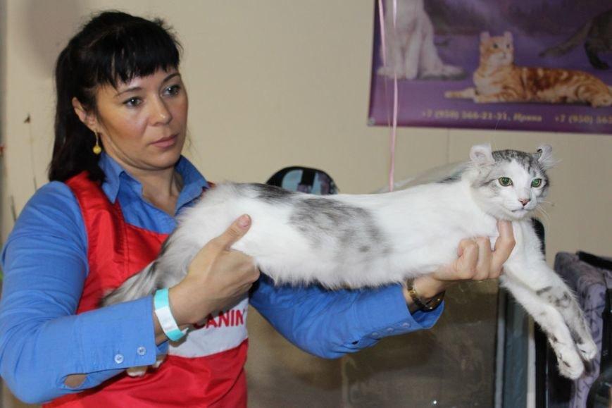 Весенние кошки зарядили позитивом сыктывкарцев (фото) - фото 3
