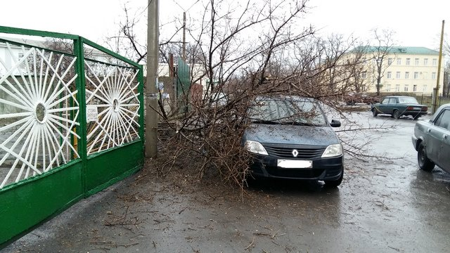 В Новошахтинске возле детского сада рухнуло дерево, зацепив Renault Logan (фото) - фото 2