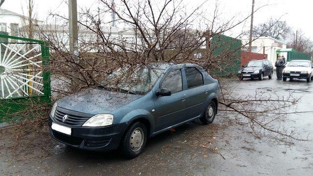 В Новошахтинске возле детского сада рухнуло дерево, зацепив Renault Logan (фото) - фото 1