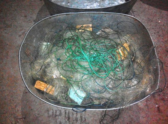 На Полтавщине браконьеры выловили рыбки на несколько десятков тисяч грн (фото) - фото 1