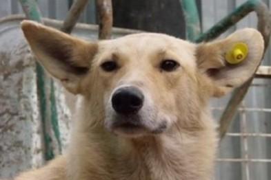 """В Кривом Роге: начали стерилизовать бездомных собак, слоган о """"едином"""" признали оценочным суждением, задержали угонщиков люксовых внедорож..., фото-2"""