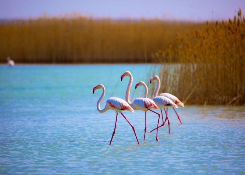 IMGL4486-Фламинго-на-Караколе