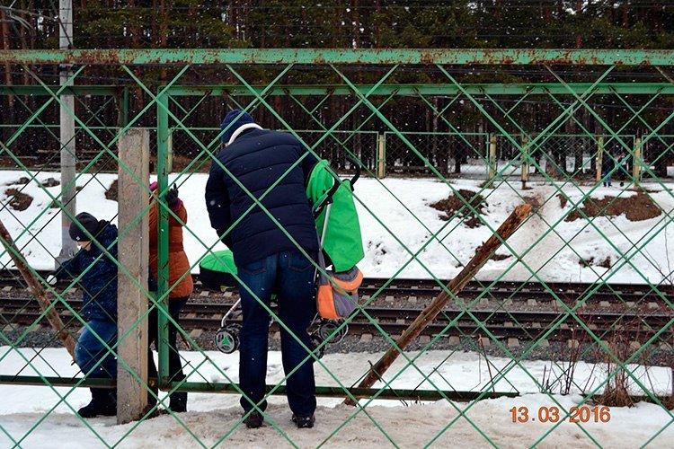 Прогулка по Комсомольской роще - памятнику природы областного значения в Твери (ФОТО) (фото) - фото 1