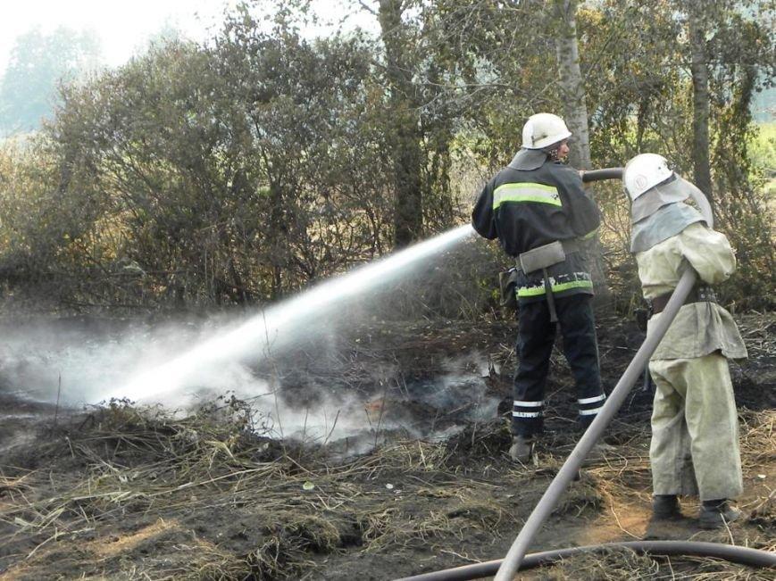 В Днепродзержинске массово сжигают сухую траву и листву (фото) - фото 2