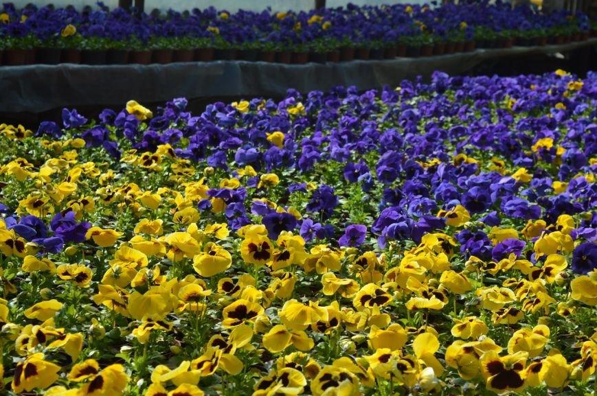 В теплицы КП «ЗЕЛЕНХОЗ» Черноморска пришла весна (+ФОТО) (фото) - фото 8
