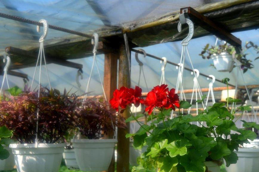 В теплицы КП «ЗЕЛЕНХОЗ» Черноморска пришла весна (+ФОТО) (фото) - фото 1