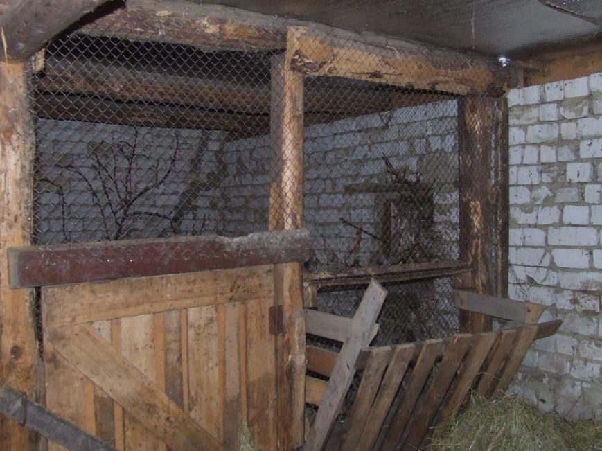 В Ульяновске больных птиц переселяют в новое место (фото) - фото 1