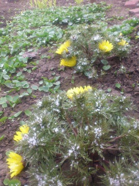Кривой Рог накрыло мартовским снегом (ФОТО), фото-1