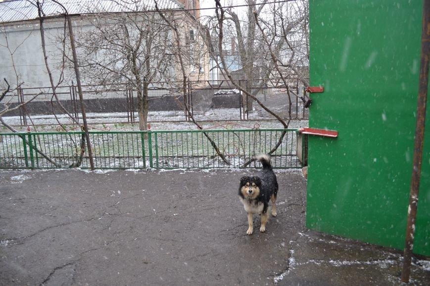 Кривой Рог накрыло мартовским снегом (ФОТО), фото-4