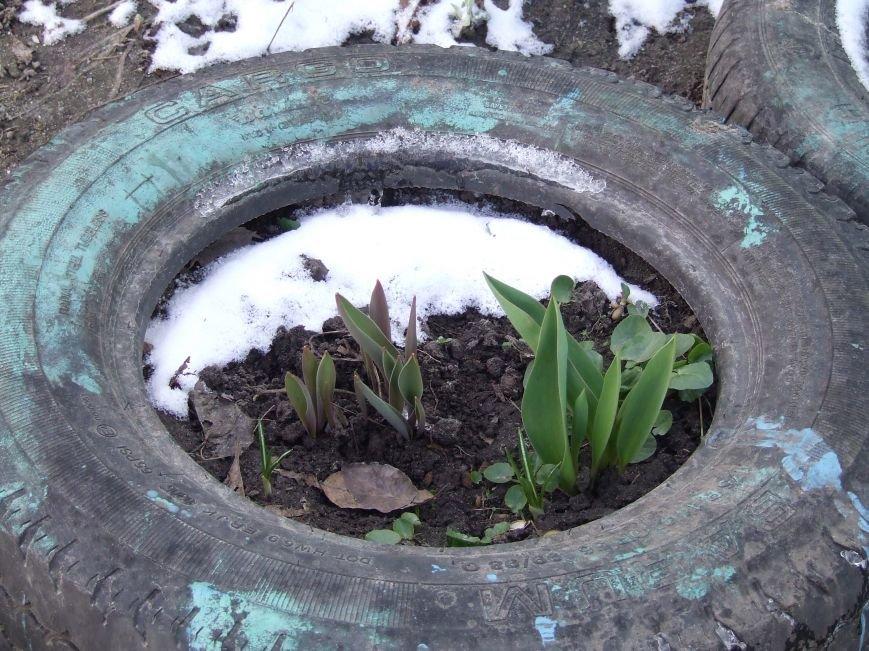 Примхлива білоцерківська весна (фото) - фото 2