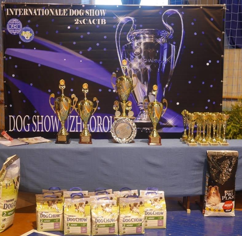 В Ужгороді відбулась виставка собак (фото) - фото 4