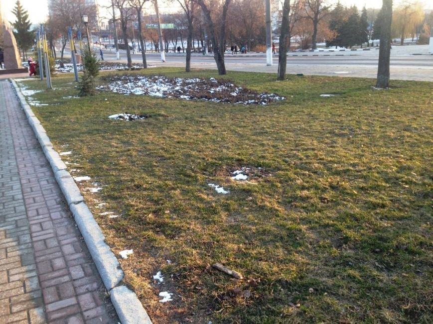 В Сумах вандалы срубили голубую ель, посаженную экс-мэром (ФОТО) (фото) - фото 1