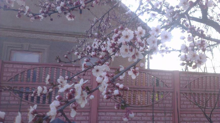 d60e777a293c26477fe1f7d26f372f3e На юге Одесской области зацвели абрикосы