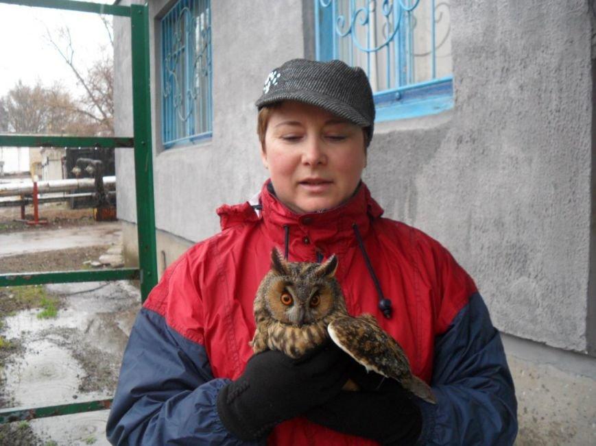В Мариуполе жительница нашла совенка и отдала его в зоопарк (ФОТО) (фото) - фото 1