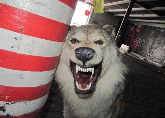 В Киеве пьяные туристы украли из отеля чучело волка (ФОТО) (фото) - фото 3