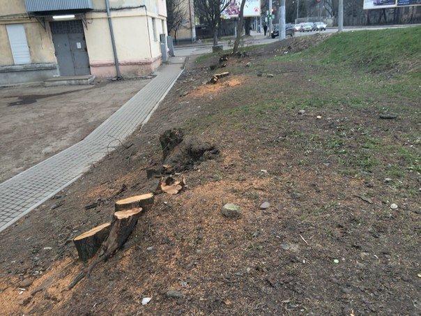 Чому зрізали дерева біля будинку, що на вул. Окружна, 44 (фото) - фото 5