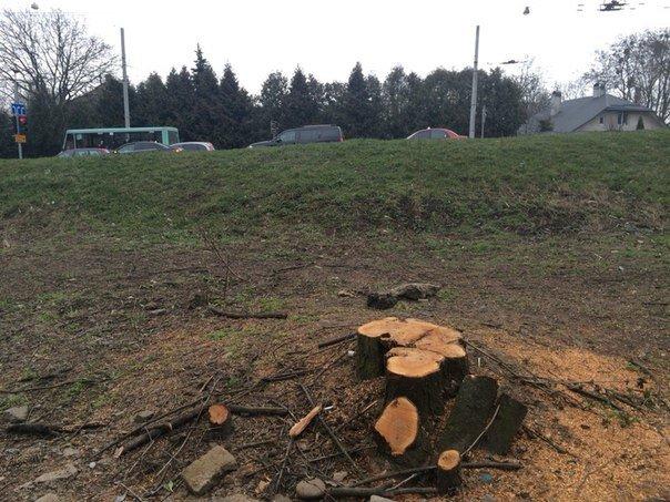 Чому зрізали дерева біля будинку, що на вул. Окружна, 44 (фото) - фото 1