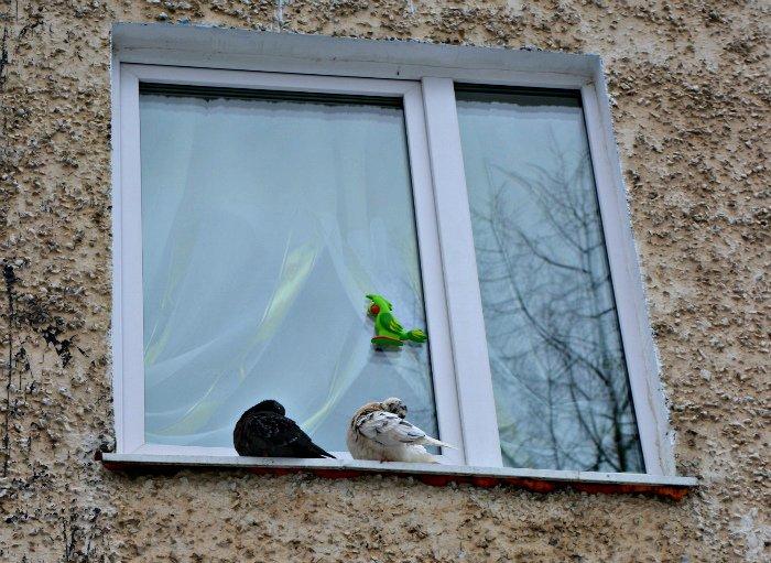 Дети, старики и голуби. Как Новополоцк встретил астрономическую весну, фото-28