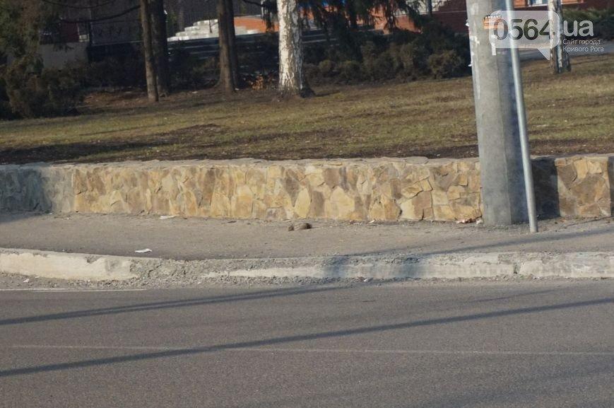 Украли или забыли установить: криворожане жалуются на отсутствие дорожных знаков на улице Рзянкина (ФОТО) (фото) - фото 3