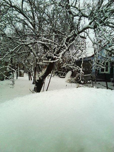 5ca37cc95c6ac346e77afb47d30e86e9 В Одесскую область вернулась зима: фото цветущих деревьев в снегу