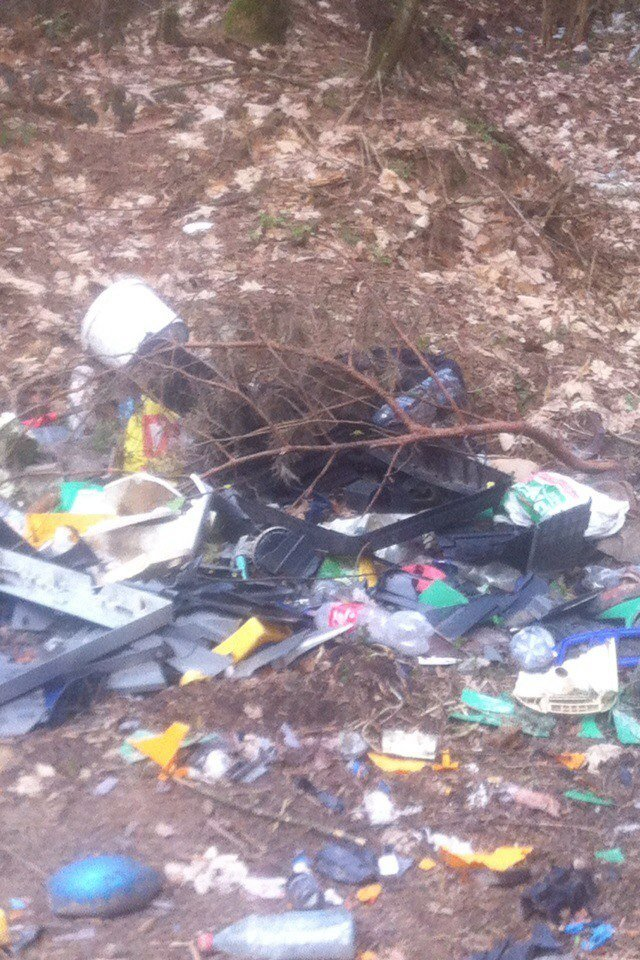 Львівські ліси перетворилися на сміттєзвалище thumbnail