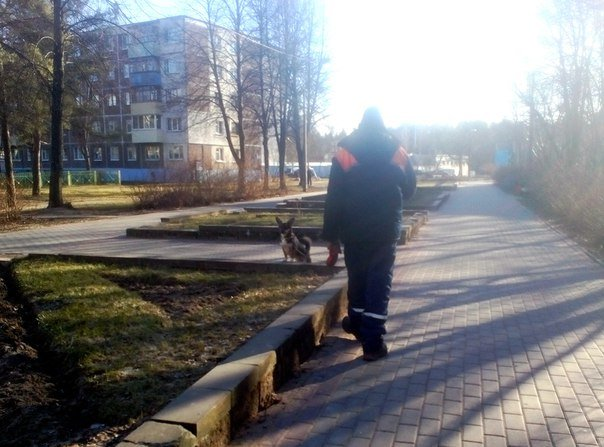 «Собака уже «расслабилась», мне её насильно тащить на специальную лужайку?». Где и как выгуливают собак в Новополоцке (фото) - фото 1