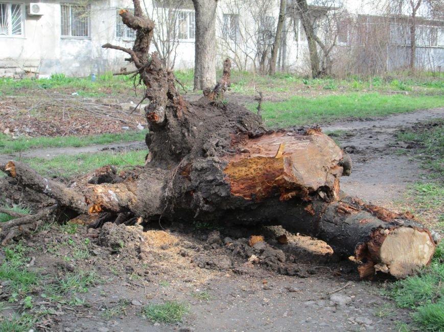 5725029b1fffc334517c59ac457fd8e0 На одесских «Черемушках» безжалостно вырубили деревья