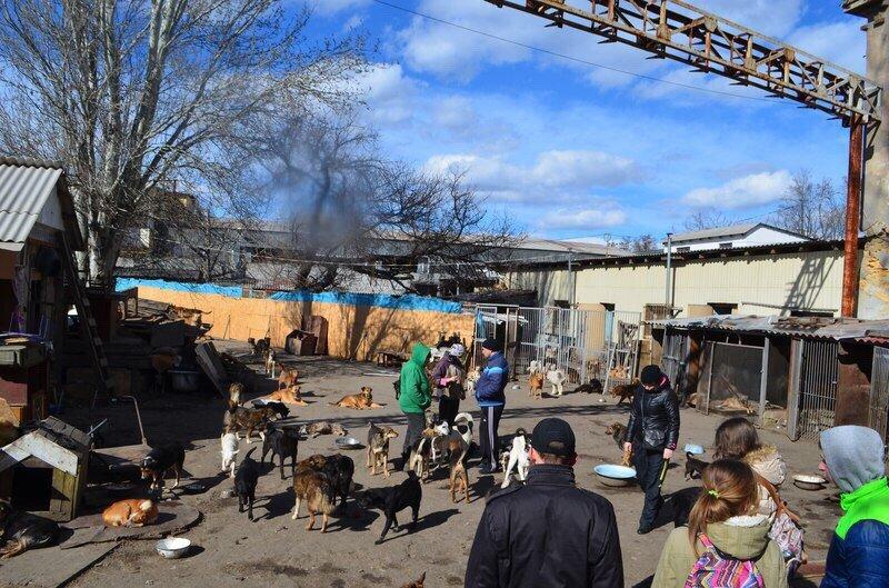 1368f2ec52e1ffa31bec1b5bbe8c33d2 Одесские патриоты обвиняют городскую власть в наплевательском отношении к животным