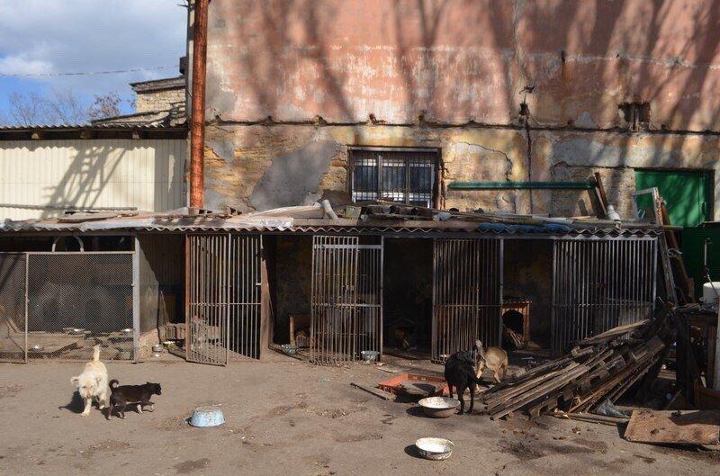 bdb3aae1b0f0f3f67cf287deae8485d7 Одесские патриоты обвиняют городскую власть в наплевательском отношении к животным