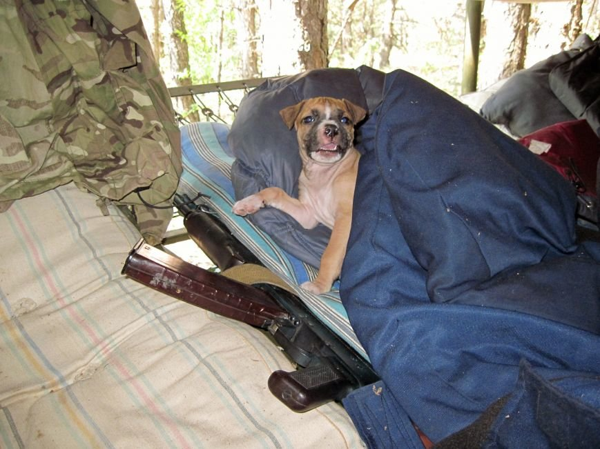 Спокій ужгородських солдат у зоні АТО оберігає кіт з гранатою (фото) - фото 3