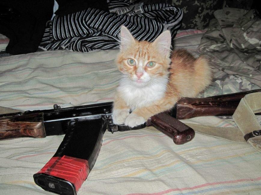 Спокій ужгородських солдат у зоні АТО оберігає кіт з гранатою (фото) - фото 2