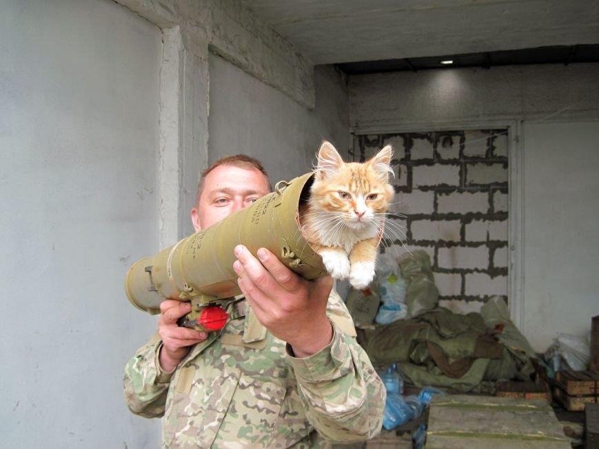 Спокій ужгородських солдат у зоні АТО оберігає кіт з гранатою (фото) - фото 5
