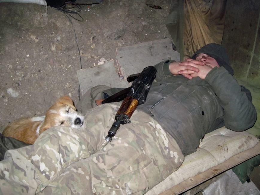 Спокій ужгородських солдат у зоні АТО оберігає кіт з гранатою (фото) - фото 4
